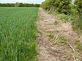 Path near Bunny - geograph.org.uk - 1335919.jpg