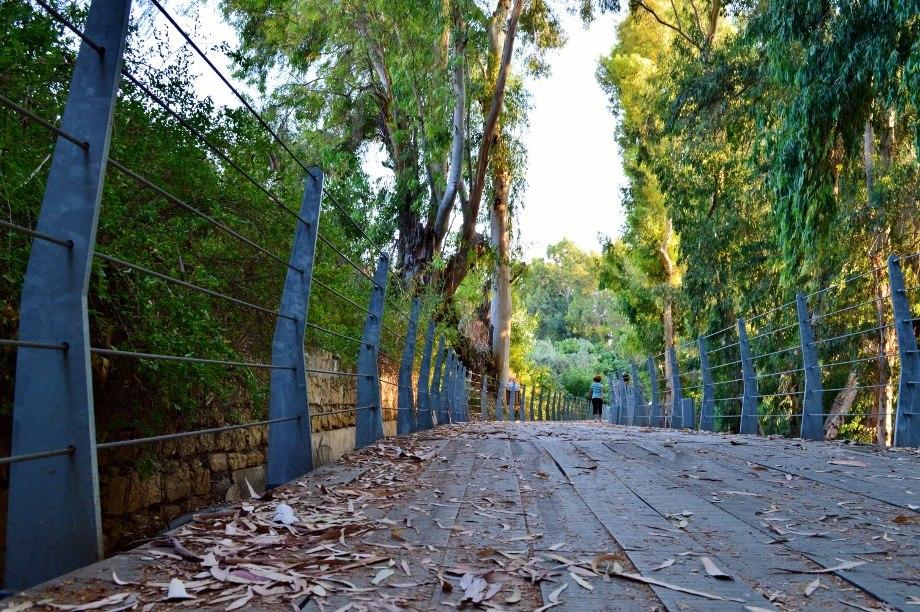 Pedieos river walking routes Green leaf Nicosia Republic of Cyprus