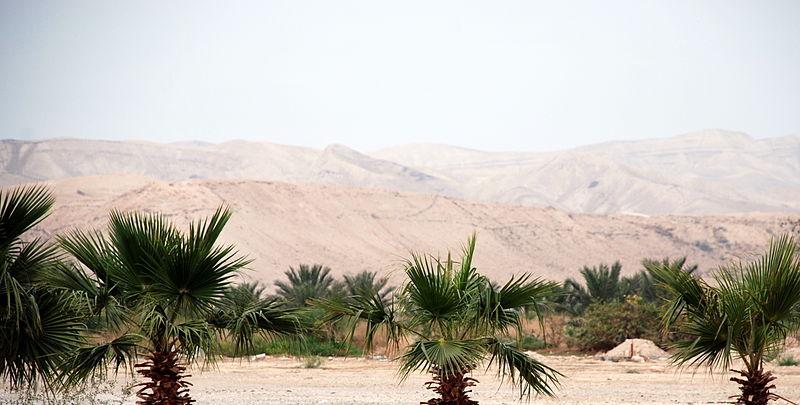 Palm Trees Desert