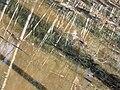 PikiWiki Israel 6469 Geography of Israel.JPG