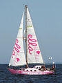 Pink Lady sailing (cropped).jpg