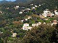 Pino-Casuccio-Ciocce.jpg