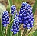 Plant on Mount Ara 4.jpg