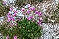 Plants from Cinque Torri 16.jpg
