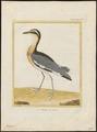 Pluvianus aegyptius - 1700-1880 - Print - Iconographia Zoologica - Special Collections University of Amsterdam - UBA01 IZ17200295.tif