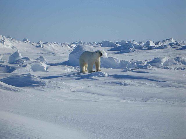 Arktickým podmienkam sa prispôsobilo len málo druhov