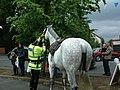 Police Horse - geograph.org.uk - 1071150.jpg