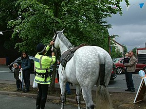 English: Police Horse One of the Police horses...
