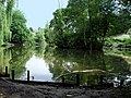 Pond in Stone Lodge Park - geograph.org.uk - 1348262.jpg