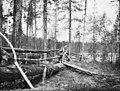 Poroja metsässä, Vuoskujauri.jpg