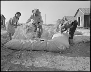 Palliasse - Ticks being filled with straw by Japanese-American internees at the Poston War Relocation Center in 1942