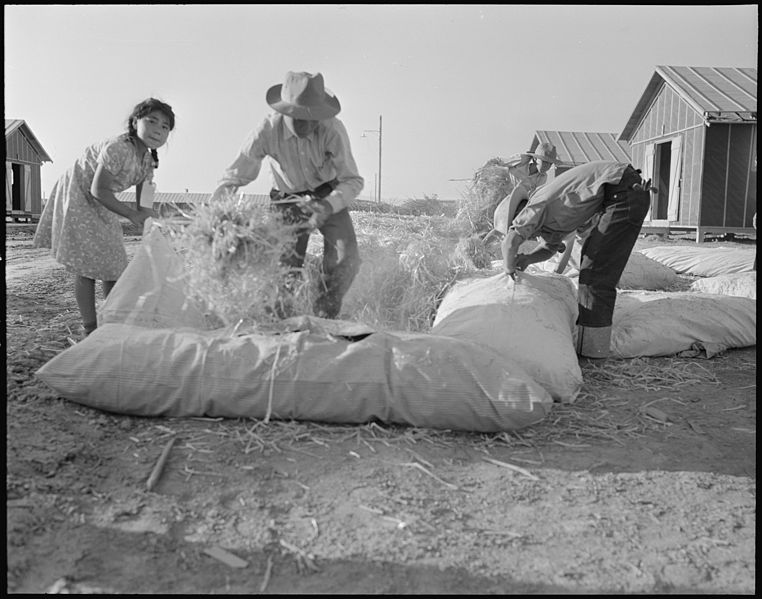 File:Poston, Arizona. Filling straw ticks for mattresses at Colorado River Relocation center for evacuee . . . - NARA - 536109.jpg