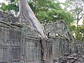 Preah Khan - 005 Tree growing over Buildings (8580005798).jpg