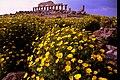 Primavera - panoramio (3).jpg
