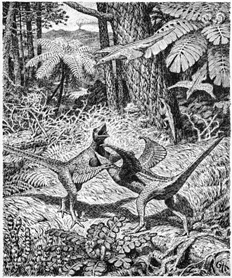 Origin of birds - Heilmann's hypothetical illustration of a pair of fighting 'Proaves' from 1916