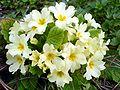 Prolećno cveće 3 2.jpg