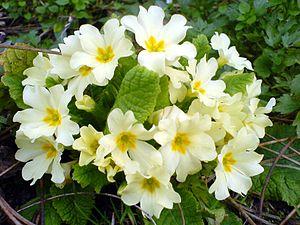 Spring flowers. Edit.