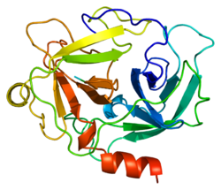 Protein CTSG PDB 1au8.png