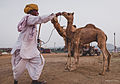 Pushkar, Rajasthan - India (15448897444).jpg