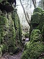 Puzzlewood (Andy Dingley).jpg