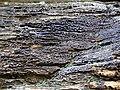 Quartzose sandstone (Black Hand Sandstone, Lower Mississippian; Black Hand Gorge, Ohio, USA) 6 (30975837842).jpg