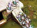 Rùa ở chùa Ngọc Hoàng.jpg