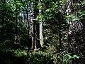 REZERWAT PRZYRODY Olbina 02 - panoramio.jpg