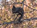 Red squirrel P1666218 (2) (49119314466).jpg