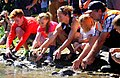 Releasing whio into the Tongariro river by DOC, Genesis Energy, Tongariro River Rafting, and students 01.jpg