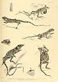 Reptiles of British India.jpg