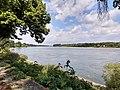 Rhine at Rheindürkheim.jpg
