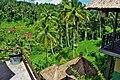 Rice Fields in Ubud Indonesia Bali - panoramio (23).jpg