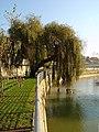 Rio Arunca - Pombal - Portugal (369313448).jpg