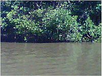 Rio Higuamo.JPG