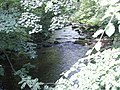 River near Healey - geograph.org.uk - 101527.jpg
