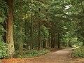 Road from Lodge Inclosure - geograph.org.uk - 965526.jpg