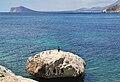 Roca amb corb marí, Calp.JPG
