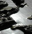 Rock pool ripple.jpg
