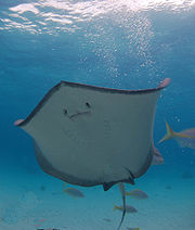 stingray city, cayman islands scuba tour