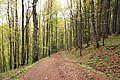 Romania - trail 5.jpg