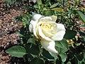 Rosa Polarstern 2018-07-10 5433.jpg