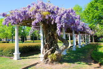 West Point, Mississippi - Sallie Kate Winters Park in full bloom