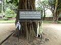Samadhi Buddha Statue (Anuradhapura) 04.JPG