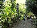 San Juan Botanical Garden - DSC07092.JPG
