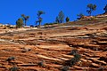 Sandstone showing Cross-bedding Zion National Park Utah USA.jpg