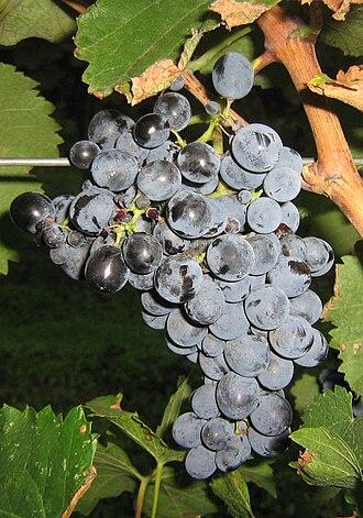 Saperavi - Saperavi grapes