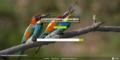 Screenshot WMDE Attribution Generator Tool.PNG