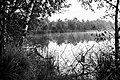 Senden, Venner Moor -- 2013 -- 2283-5 (bw).jpg