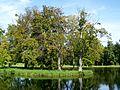Senlis (60), abbaye de la Victoire, île sur le grand étang.jpg
