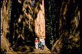 Sequoia and Kings Canyon National Parks SEKI2207.jpg